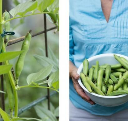 gartengestaltung ideen für anfänger - essbare pflanzen einpflanzen, Garten ideen
