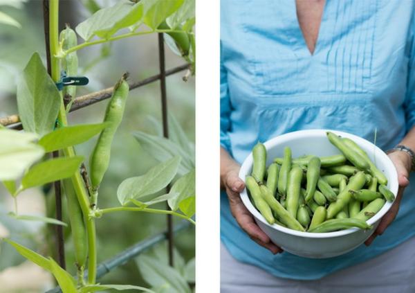 gartengestaltung ideen essbare pflanzen bohnen