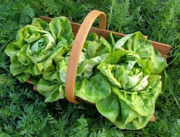 gartengestaltung ideen essbare pflanzen grüne salat