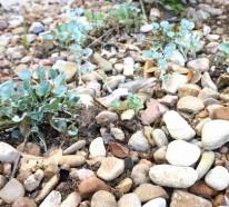 Vorbereitung für den kommenden Frühling – wie können Sie Ihren Garten umgestalten
