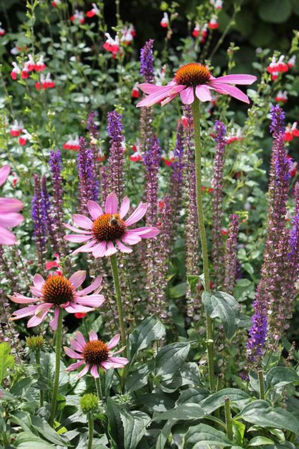 ideen anlegen bilder gartengestaltung modern lila blüten