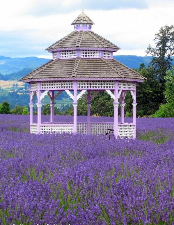 gartenlauben aus holz pergolas lila blüten