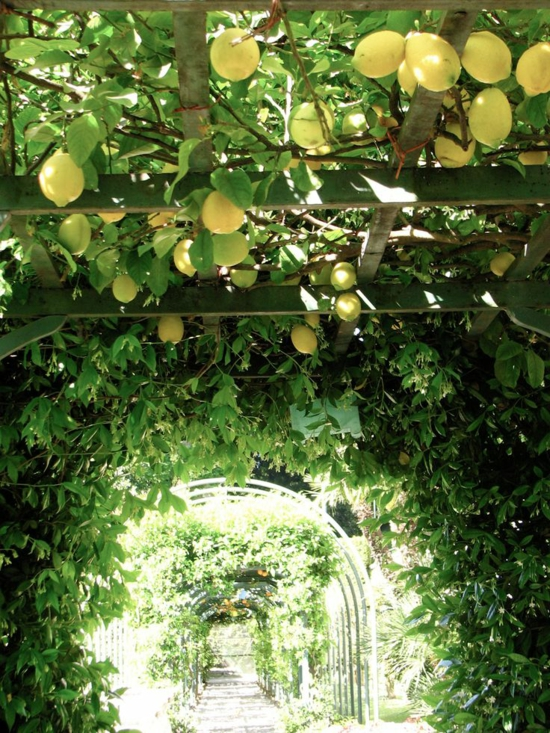 gartenpergola kletterpflanzen tunnel mediterraner gartengestaltung zitronenbaum