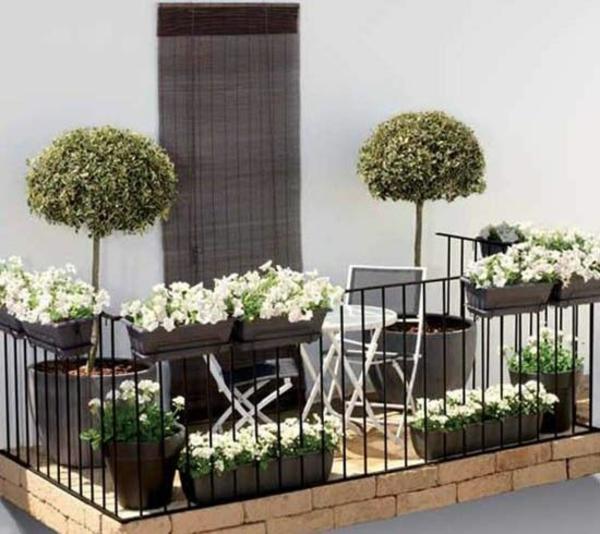 großartige pflanzen auf der terrasse