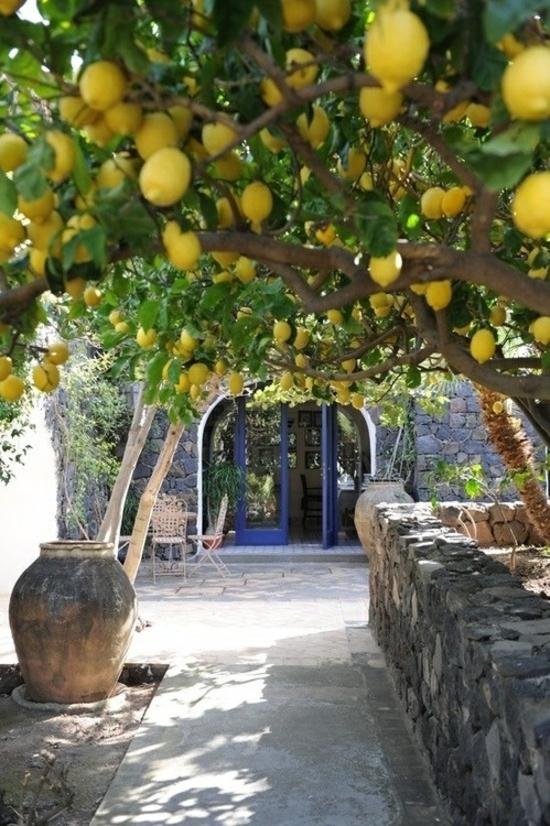 mediterraner garten anlegen pflanzen zitronenbaum