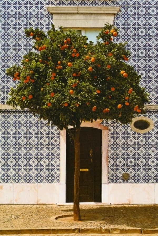 mittelmeer orange baum spanien outdoor