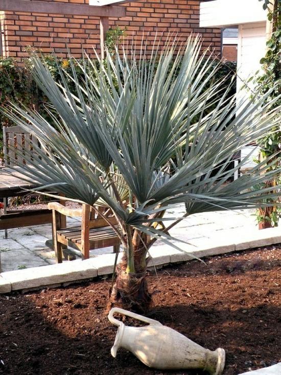 palmenarten im mediterraner garten pflanzen ideen deko elemente