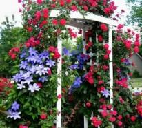 Pergola Beschattung – Sonnenschutz im Garten und im Hinterhof