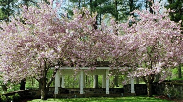 pollen allergie heuschnupfen bekämpfen frühling garten