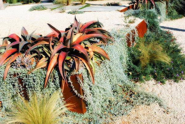sukkulenten gartenpflanzen wassersparend gartenideen