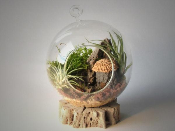 terrarium selber bauen glassphäre steine sekkulenten treibholz