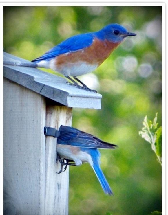 vogelhaus bauen holz umweltfreundlich blau vogel