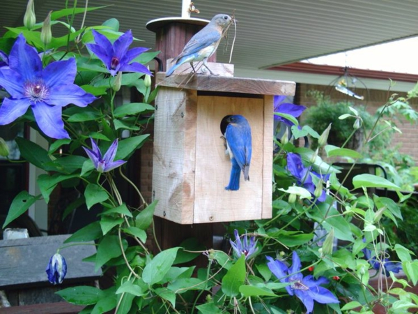 holz umweltfreundlich vogelhäuschen selber bauen schön