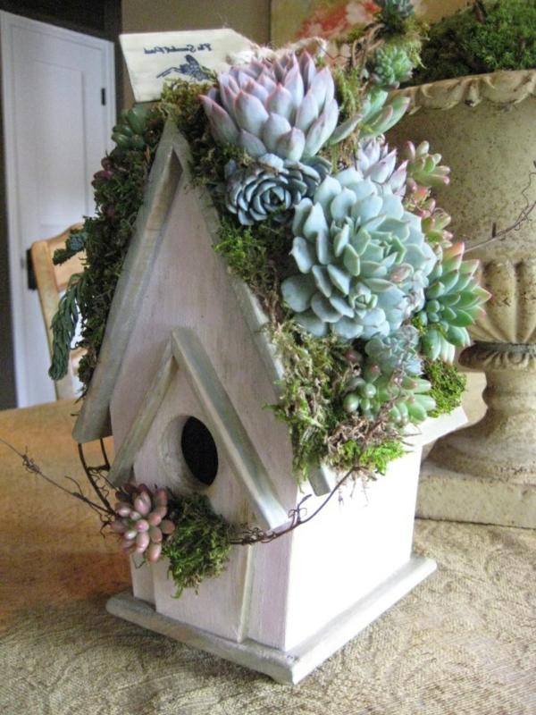 vogelhaus-selber-bauen-holz-umweltfreundlich-sukkulenten