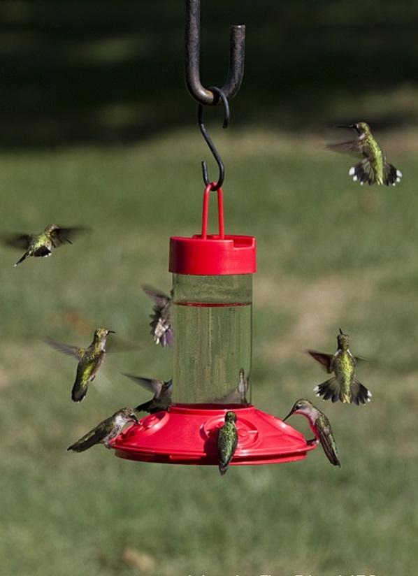 holz umweltfreundlich vogelhaus selber bauen vogeltränke
