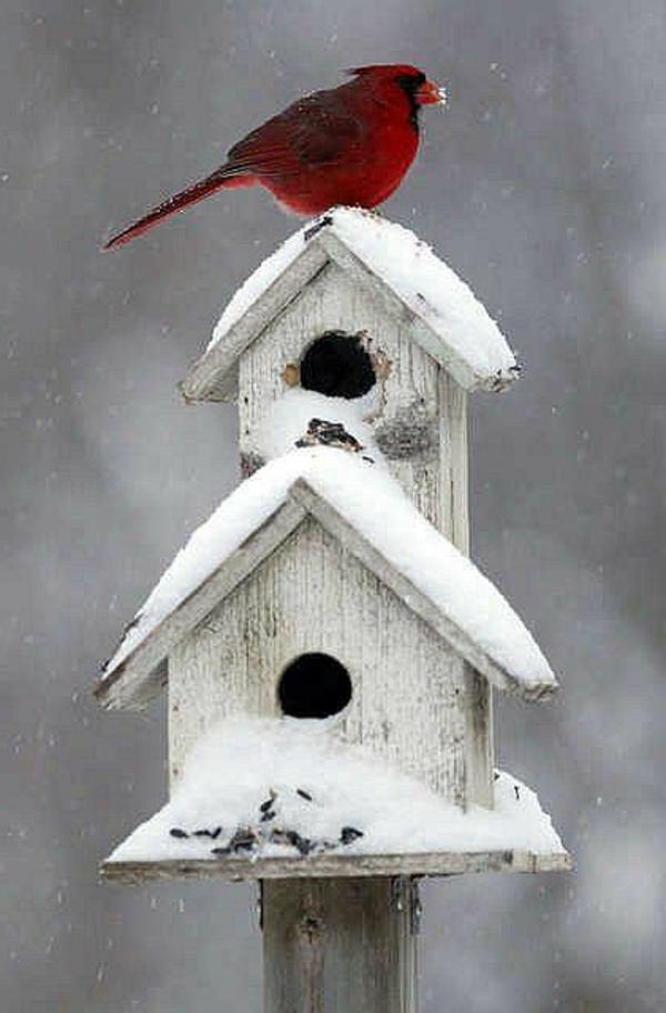Vogelhaus Bauen Welches Holz ~ holz umweltfreundlich vogelhaus selber bauen winter