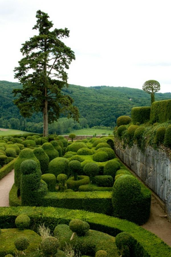 buchsbaum pflanzen und g rten wundervoll in terrakotta. Black Bedroom Furniture Sets. Home Design Ideas