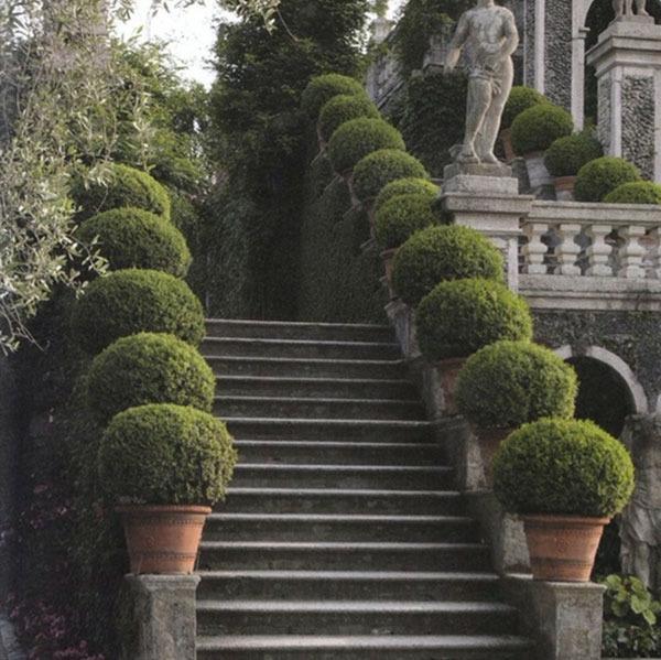 Buchsbaum Pflanzen Und G 228 Rten Wundervoll In Terrakotta