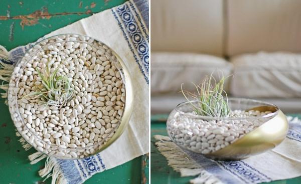 Luftpflanzen Terrarium diy project lauren donaldson