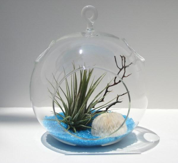 luftpflanzen terrarium sand röcke glas