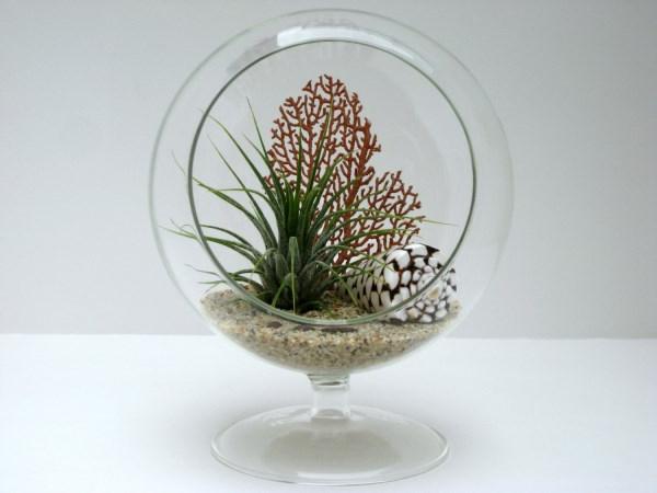 luftpflanzen terrarium muschel meer see