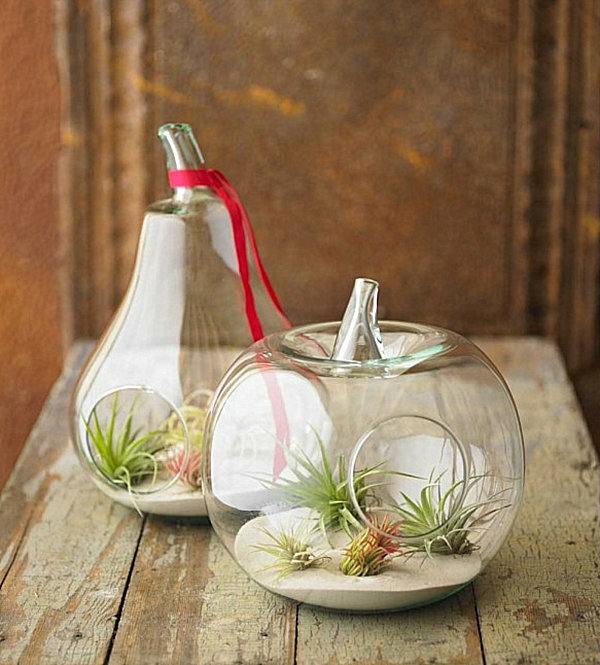 obst frucht formen luftpflanzen terrarium
