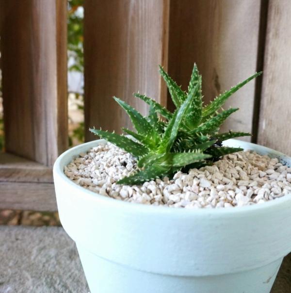 outdoor dekoideen pflanze