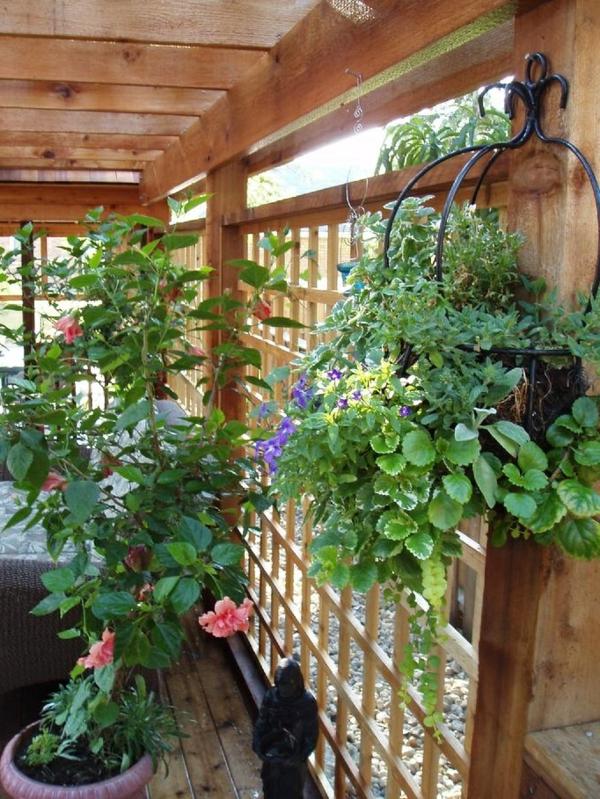 pergola bausatz pflanzen anbauen