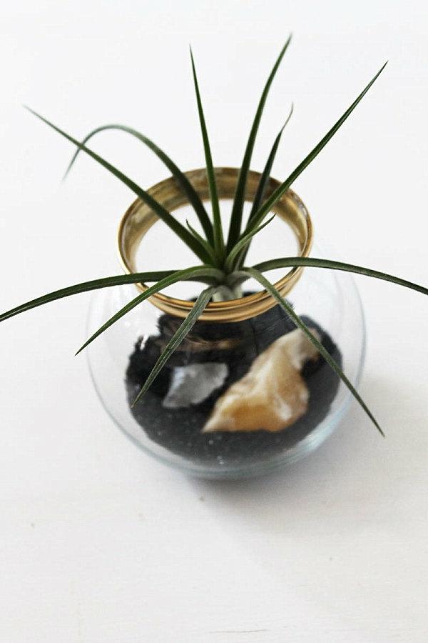 pflanzen behälter glas erdboden luftpflanzen