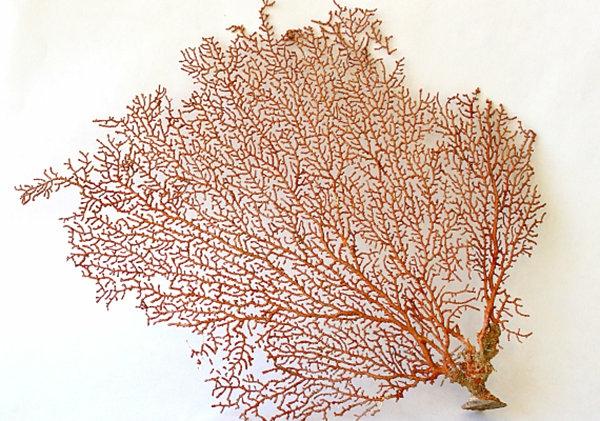 rot meer idee luftpflanzen terrarium