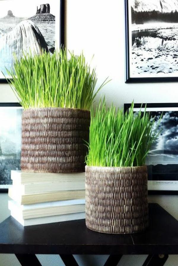 Die Farbe Grün Farbbedeutung Grün topfpflanzen