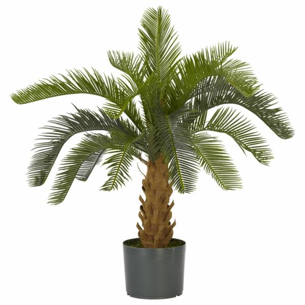 Palmenarten als zimmerpflanzen winterharte exotische for Zimmerpflanzen hydrokultur