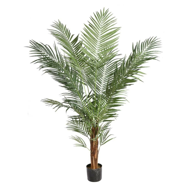 Palmenarten als Zimmerpflanzen winterhart
