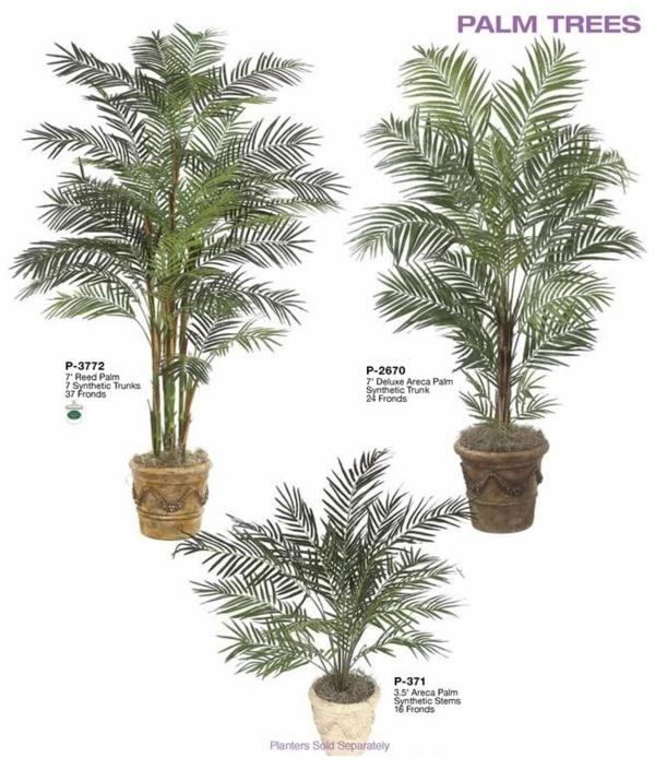 Palmenarte Zimmerpflanzen dattelpalme winterhart bäume