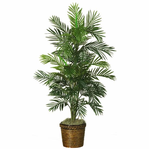 Palmenarten als Zimmerpflanzen  dattelpalme winterhart tropisch