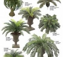 Palmenarten als Zimmerpflanzen – winterharte, exotische Lösungen