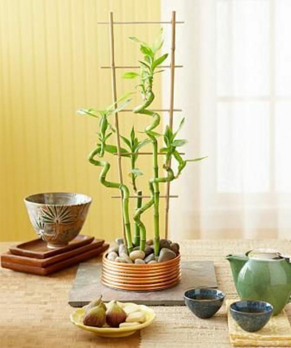 Zimmerbambus kaufen glücksbambus pflegen feucht gefäße