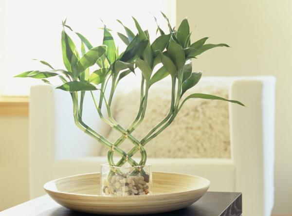 kiesel glas behälter idee  bambus zimmer indoor