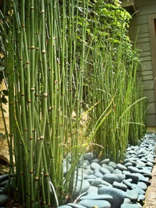 Zimmer indoor bambus kaufen glücksbambus pflegen feucht vielfalt