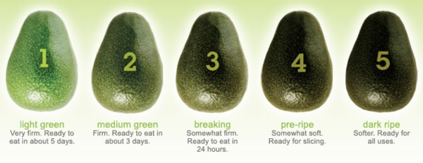 avocado anpflanzen grün reif stufen