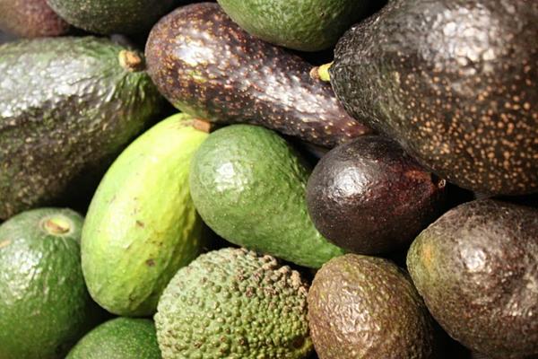 avocado pflanzen gartengestaltung ideen pflanzen
