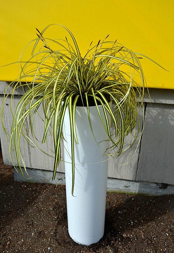 Pflanzen Besprühen