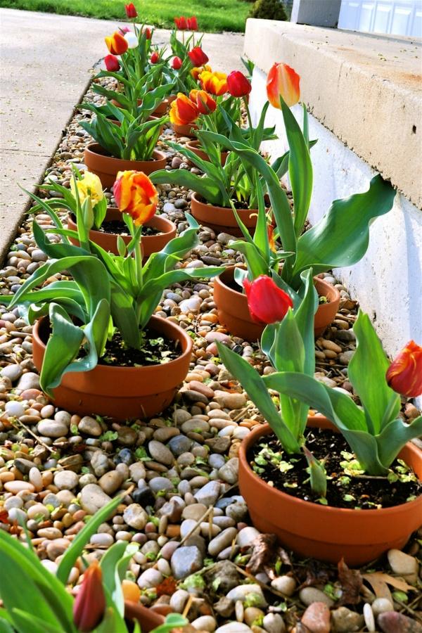 patio ideen vorgarten gestaltung kieselsteine tulpen