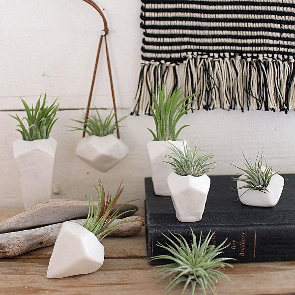 pflanzen pflege porzellan blumentöpfe luftpflanzen