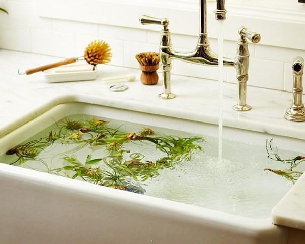 pflanzen pflege schwimmend waschbecken