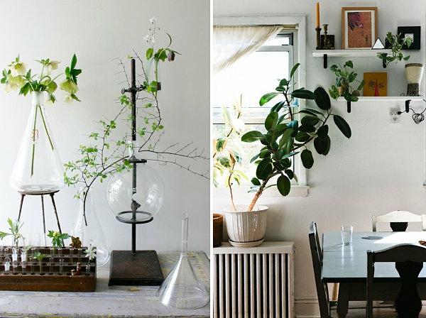 pflegeleichte blumentopf fenster Schöne Zimmerpflanzen glas ausstellen