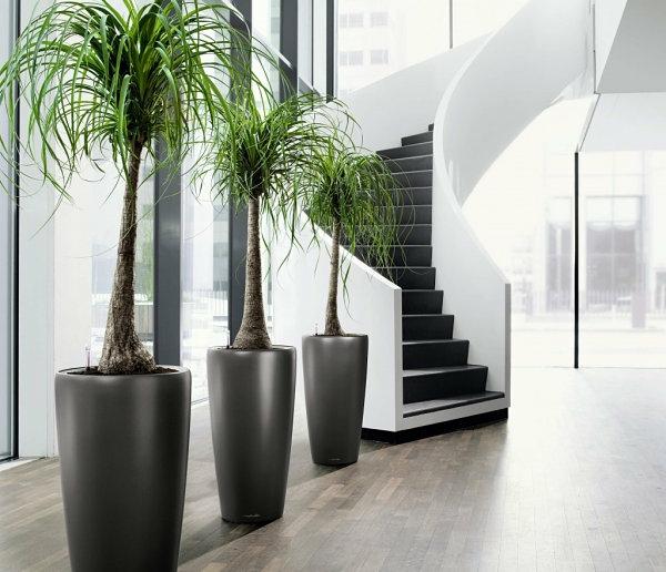 pflegeleichte glatt pflanzkübel Schöne Zimmerpflanzen groß modern