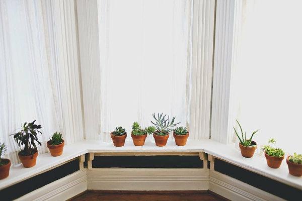 Sch ne zimmerpflanzen moderne pflegeleichte topfpflanzen for Kleine mucken in topfpflanzen