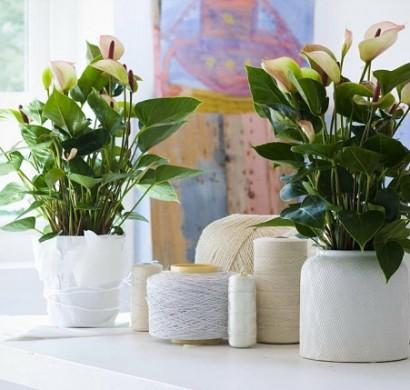 sch ne zimmerpflanzen moderne pflegeleichte topfpflanzen. Black Bedroom Furniture Sets. Home Design Ideas