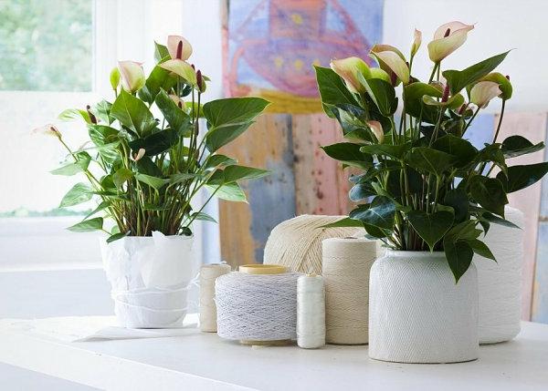 pflegeleichte Schöne Zimmerpflanzen weiß blumentopf